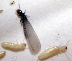 Subterranean Termite Control