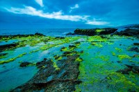 Green Algae Beach by David Muesbeck