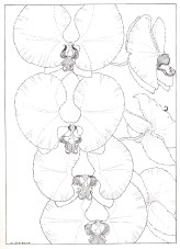 Orchids by Melinda Giordano