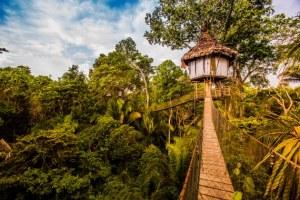 treehouse lodge peru