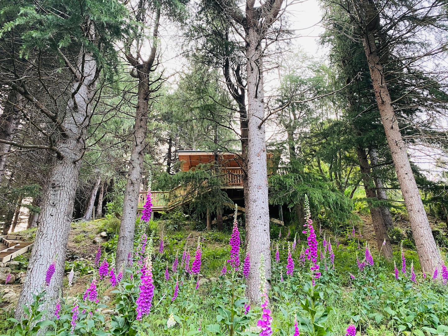 Surrounded by Nature Treehouse Rental