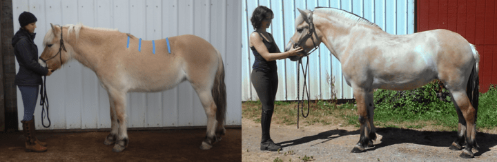 Svenna before and after six months with her treeless saddle, left view.