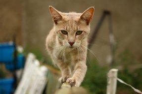 cat-1459525_640