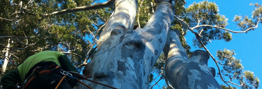 brisbane tree lopping services