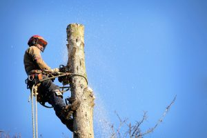 brisbane tree removal southside