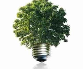 Лечение деревьев — инновационные технологии