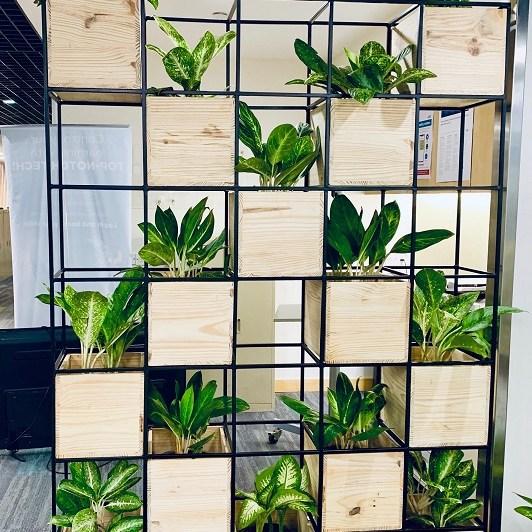 office vertical garden
