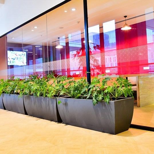 plantscaping bangalore