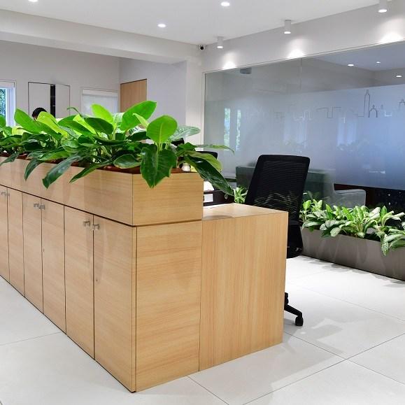 office plants for desk bangalore