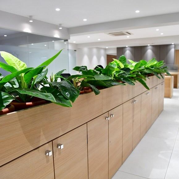 Office plants for desk