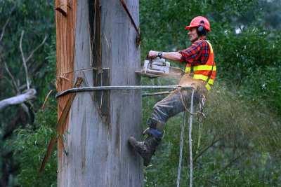Cutting a tree down