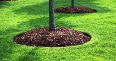 Tree Mulching Services Melbourne