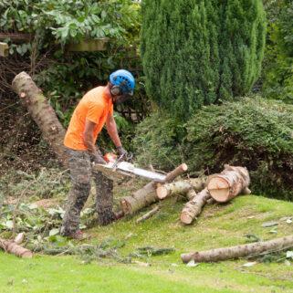 tree cutting Mansfield