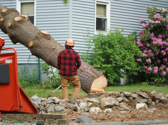 tree removal company Mansfield ma