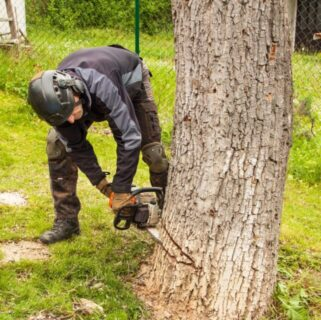 tree cutting services Norton ma