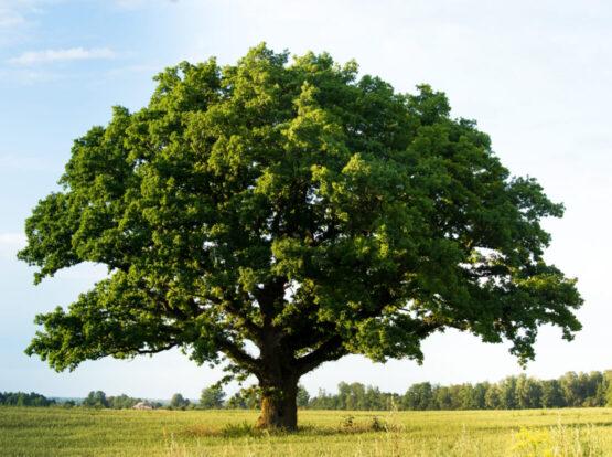 tree service Norton ma