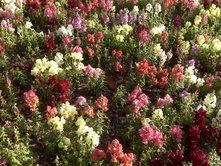 march-flowers-1.jpg