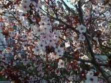 march-flowers-4.jpg