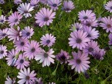 march-flowers-8.jpg
