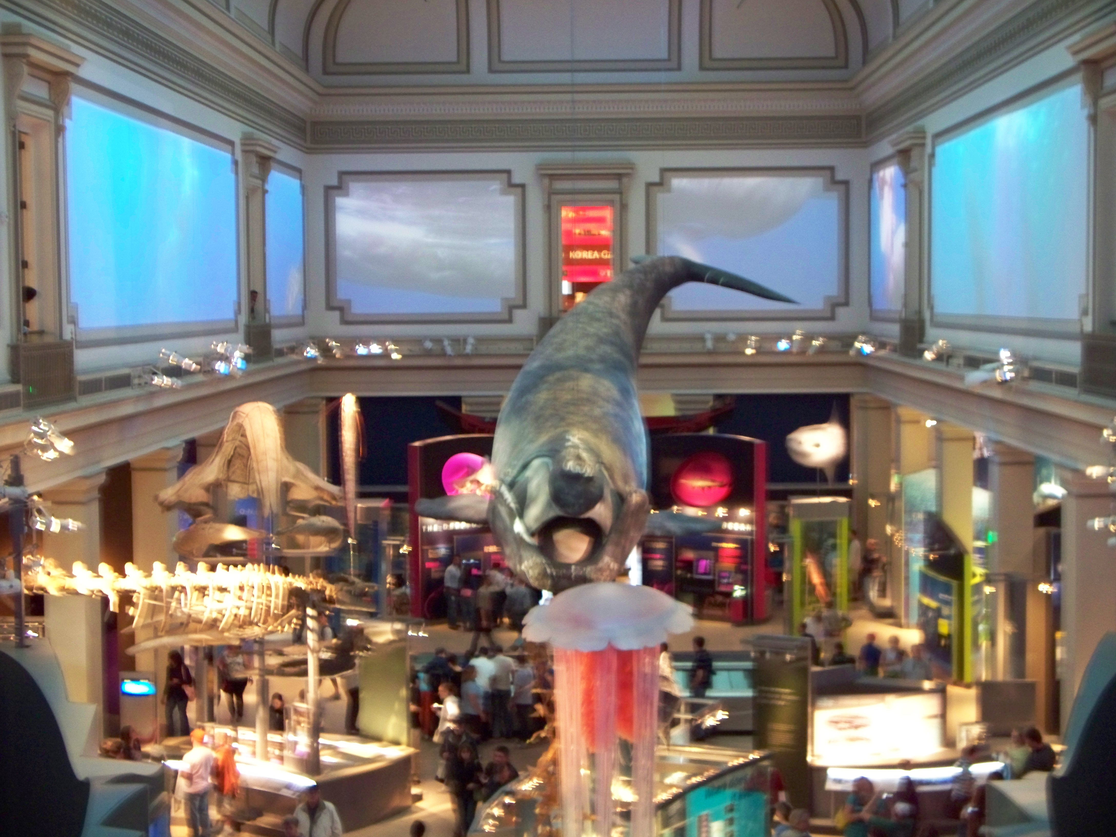 Blue Whale room at Nat His Museum