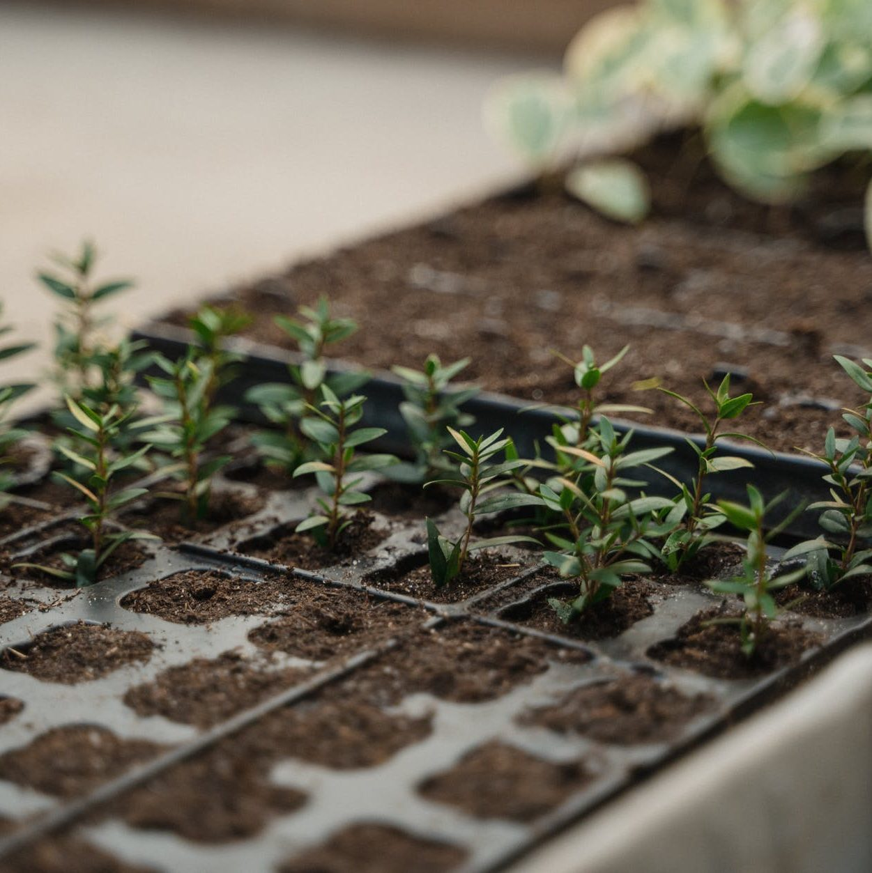 green plants on brown soil