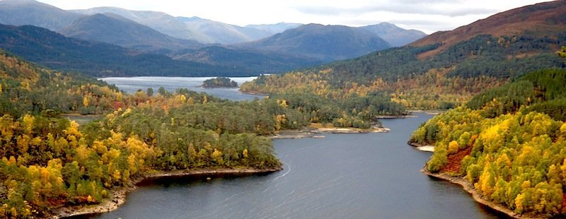 Image result for scots pine caledonian forest