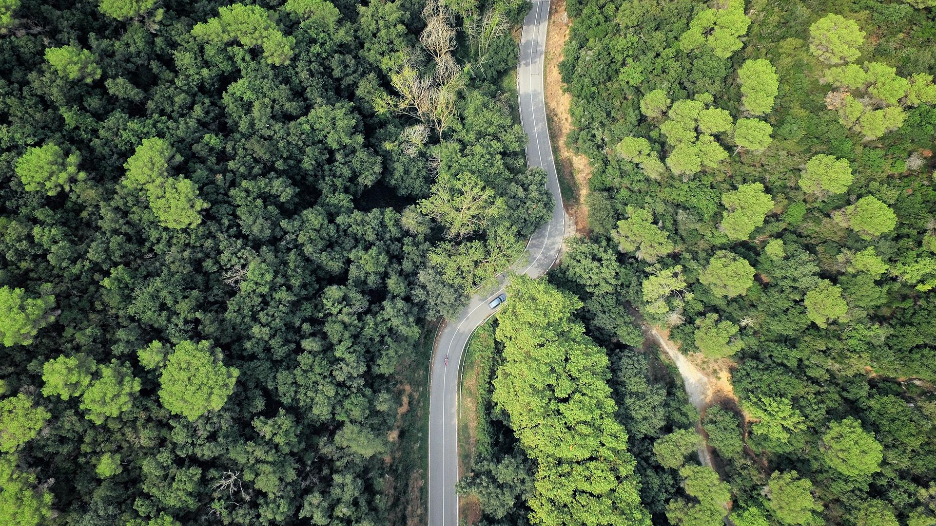 Habitat Fragmentation And It S Effects
