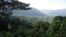 Looking out over the forests of the Rwenzori Mountains, Uganda