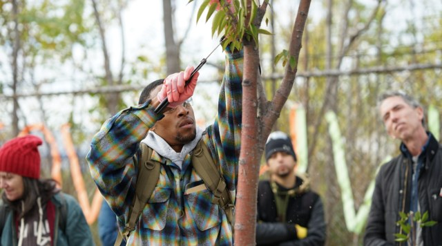 A man using a hand saw to remove a branch from a tree