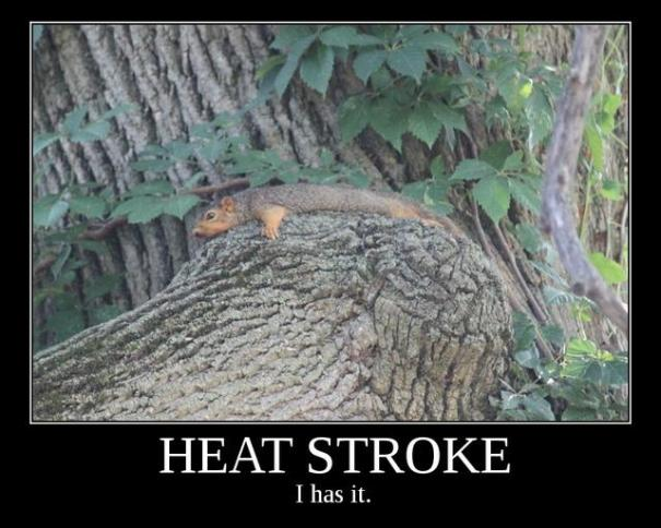 Heat Stroke Squirrel: HEAT STROKE: I has it. This demotivational squirrel is sponsored by Treesong, Real Life Superhero. When you're looking for advice on how to beat the heat, look no further than Heat Stroke Squirrel.