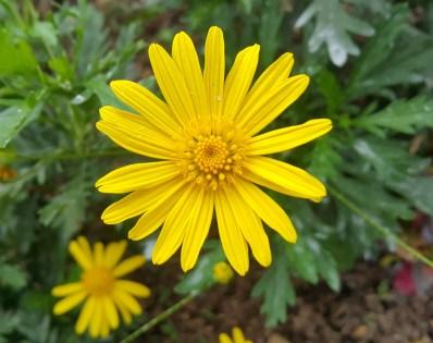 looks like a daisy