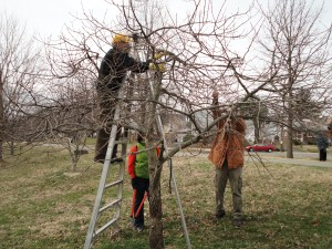 Patrick Wegeng demonstrates pruning
