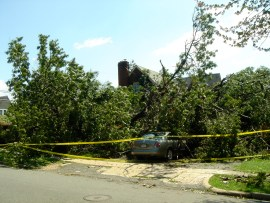 Tree laying across yard and driveway and cars