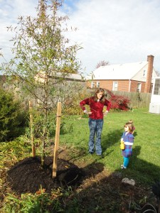 Sapling planted in backyard