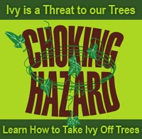 Learn to Take Ivy Off Trees