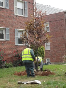 Your selected tree is planted free of charge by professionals.