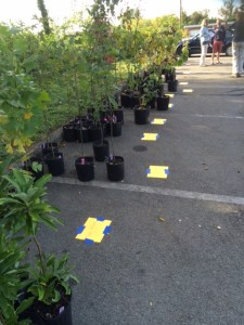 labeled trees waiting for owners