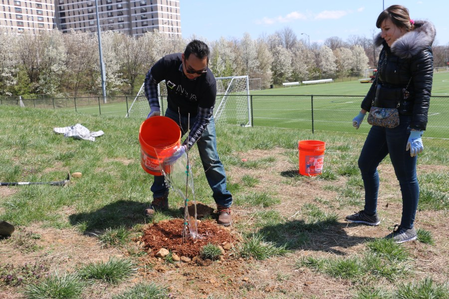 Watering a newly planted tree.