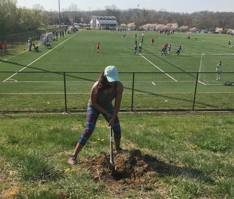 Tåsi Ada breaks through turf at Ben Brenman Park to help plant 40 trees and shrubs on April 14. Photo by Raf Gomes.