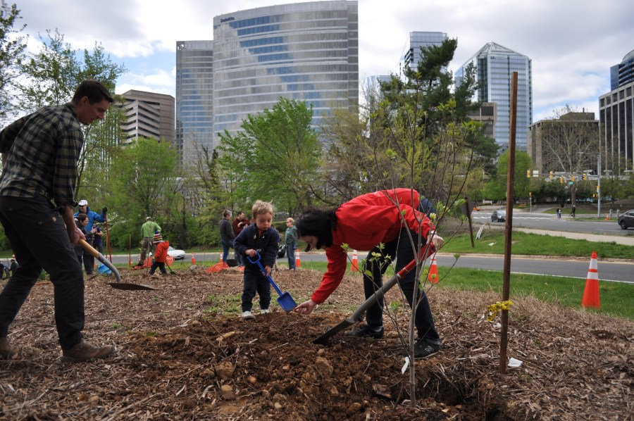 All the trees planted are native to Northern Virginia. Photo by Tree Steward Bill Anhut.