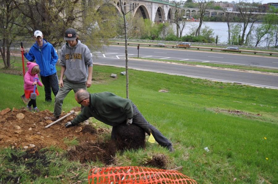 Tree Steward Steve Campbell, kneeling, prepares to help volunteers add a tree on the Virginia side of Key Bridge. Photo by Tree Sterward Bill Anhut.