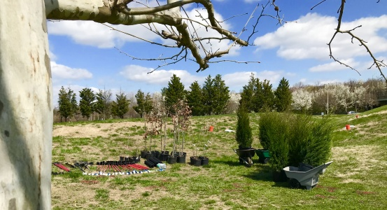 Trees and tools are assembled at Alexandria's Ben Brenman Park for use by volunteers from INTUS Windows on April 5th. Photo by Tree Steward Jo Allen.