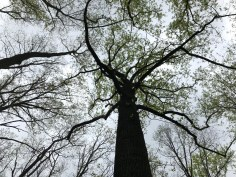 Treetop and trunk.