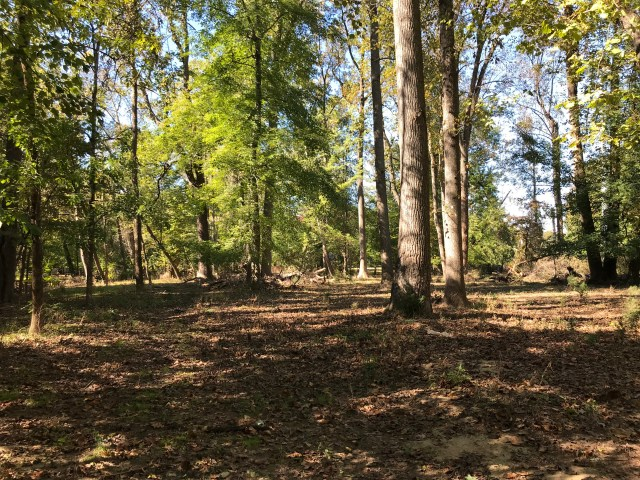 A cleared area south of the picnic shelter in Bluemont Park, 329 N. Manchester St., Arlington, will get 276 new seedlings when Tree Steward trainees plant there from 12:30-3:30 p.m. on Thursday, Nov. 8th.