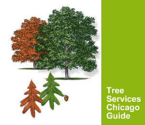 Tree Removal Services Chicago Guide