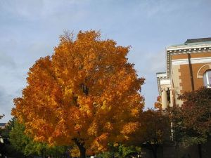 Tree by Carnegie Hall - Treesurgical