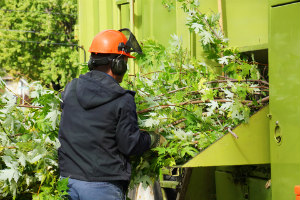 Tree Removal Services Chicago IL