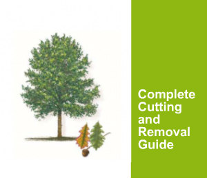 Tree Cutting and tree removal services guide
