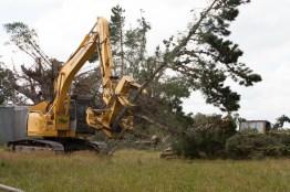tree-topping-canterbury-10