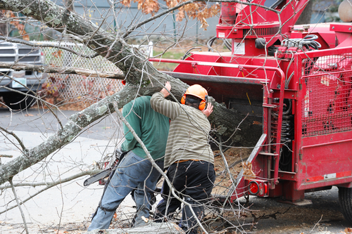 tree workers remove cut tree branches by feeding through wood-chipping equipment